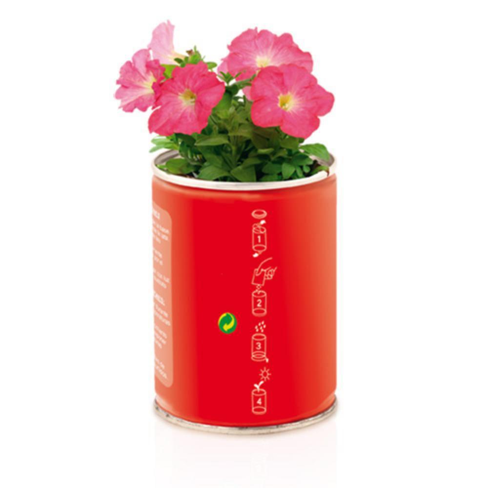 lata flores semillas petunia rojo azul verde