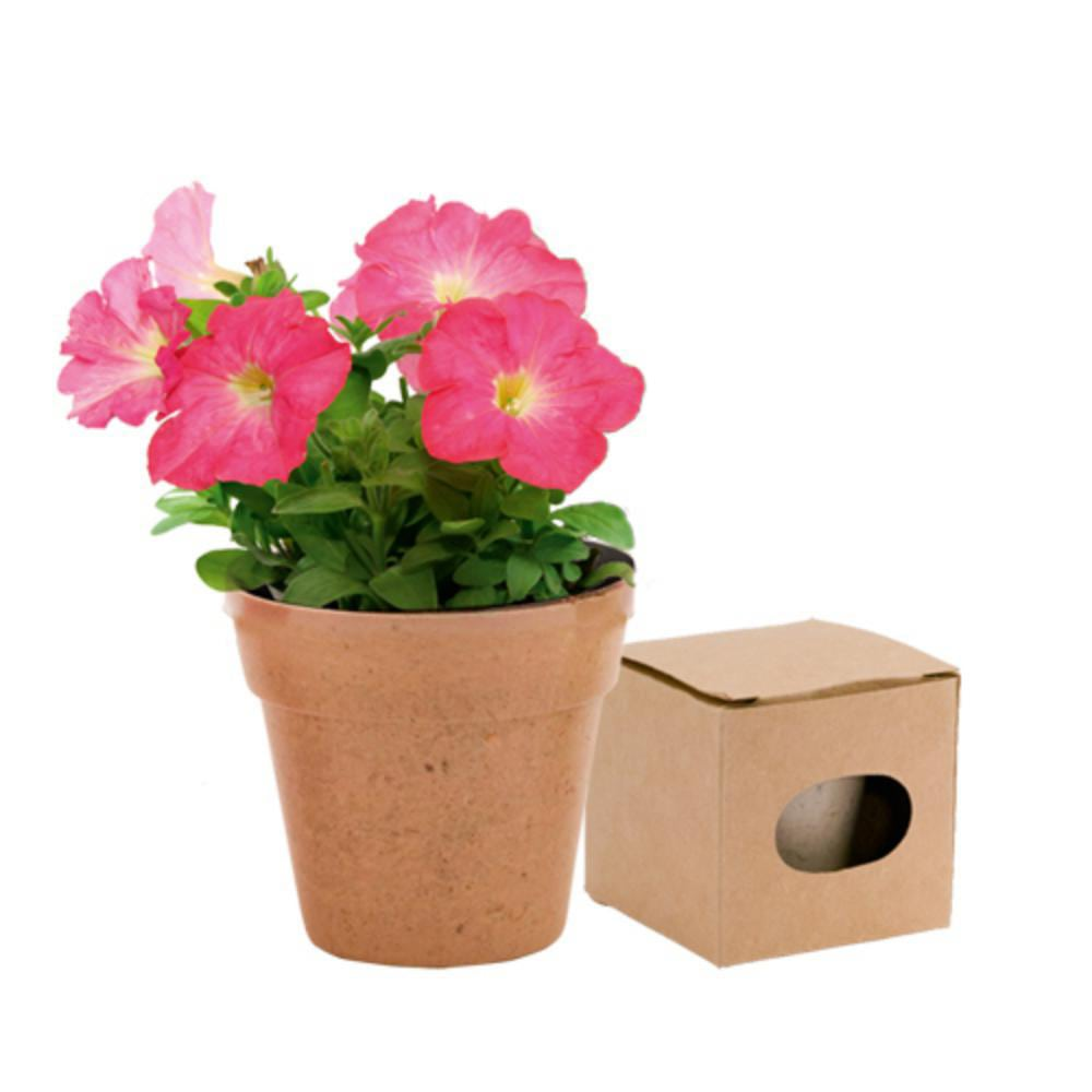 maceta biodegradable petunia ecologico